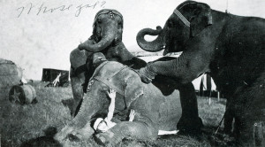 Circus_Elephants_Web